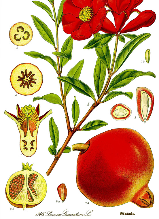 Pomegranate healing
