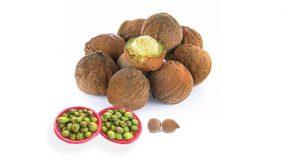 Beleric myrobalan healing herb