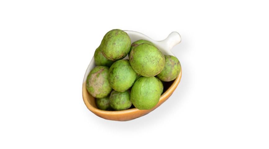 Chebulic myrobalan healing herb fruits