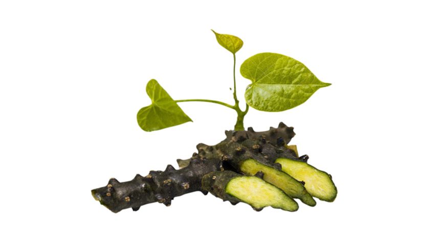 Moonseed - Tinospora cordifolia