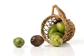 Chebulic myrobalan fruit